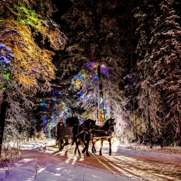 Horse drawn wagon moving through Christmas lights at the Northern Spirit Light Show.