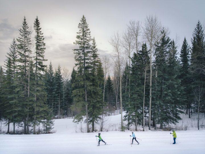 three people cross country skiing